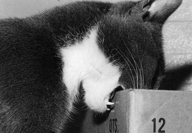 Кот недоволен коробкой. Автор Тони Мендоса