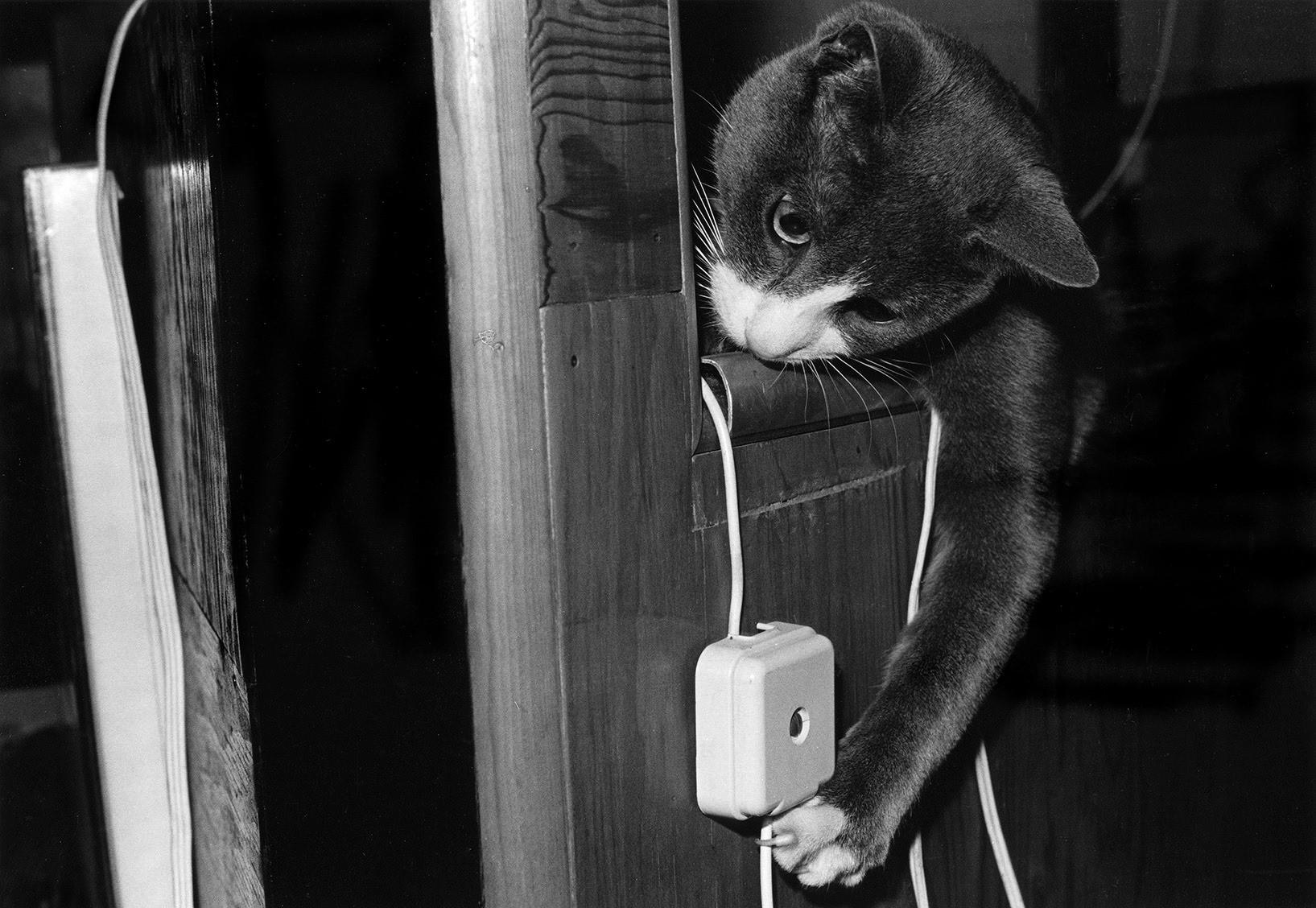 Эрни решает судьбу провода. Автор Тони Мендоса