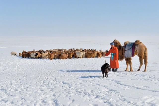 «Добрый пастырь». Монголия, 2014. Фотограф Марк Прогин