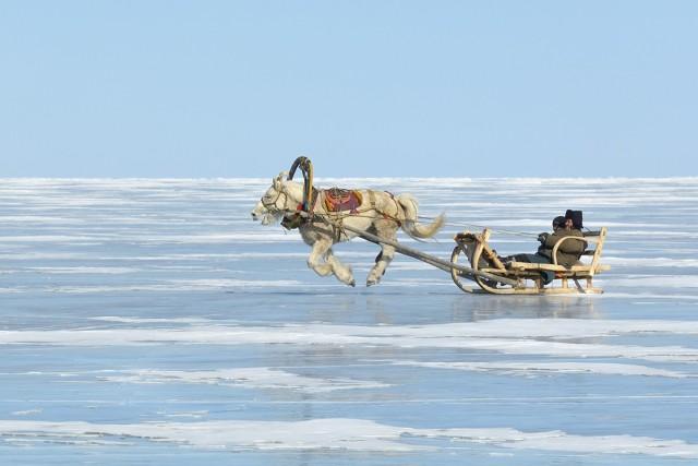 «Парящий конь». Озеро Хубсугул, Монголия, февраль 2012 года. Фотограф Марк Прогин