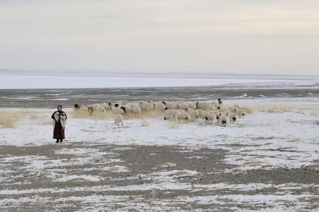 Овцеводы. Аймак Увс, недалеко от озера Хяргас-Нуур, Монголия, март 2011 года. Фотограф Марк Прогин