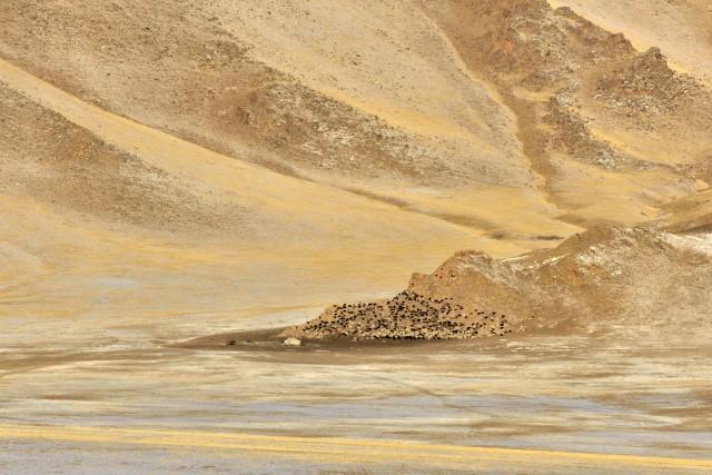 «Страна легенд». Монголия, 2007. Фотограф Марк Прогин