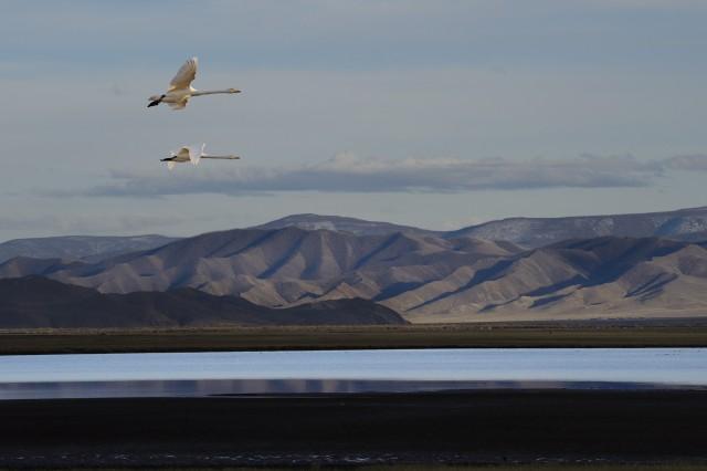 «Крылья свободы». Монголия, 2019. Фотограф Марк Прогин