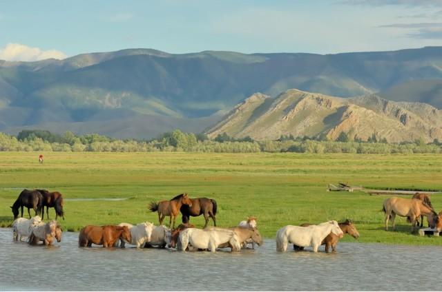 Фотографии Монголии. Автор Марк Прогин (7)