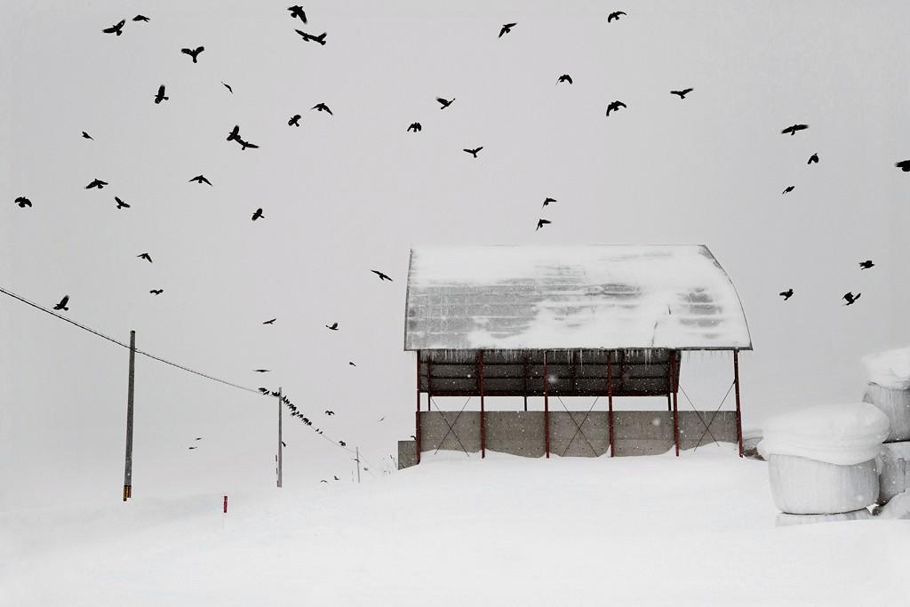 Вороны, Хоккайдо, Япония, 2018. Автор Кристоф Жакро