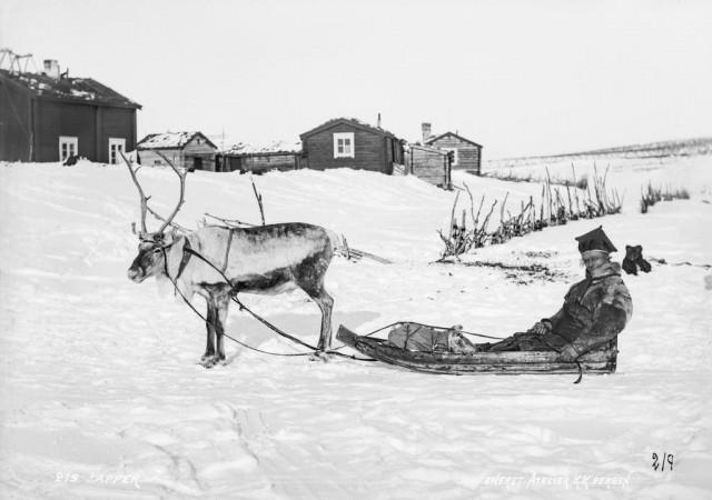 Лапландец в санях с оленем. Автор Софус Тромгольт