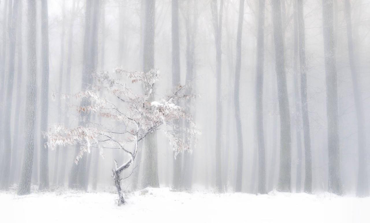 Ранняя зима в лесах Словакии, 2019. Автор Петер Свобода