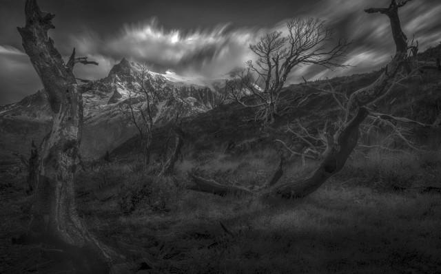 Деревья в национальном парке Торрес-дель-Пайне, Чили. Автор Петер Свобода
