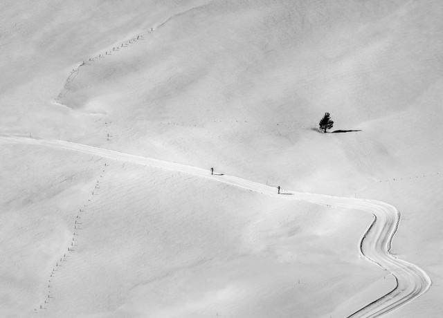 За забором. Австрийские Альпы, 2018. Автор Петер Свобода