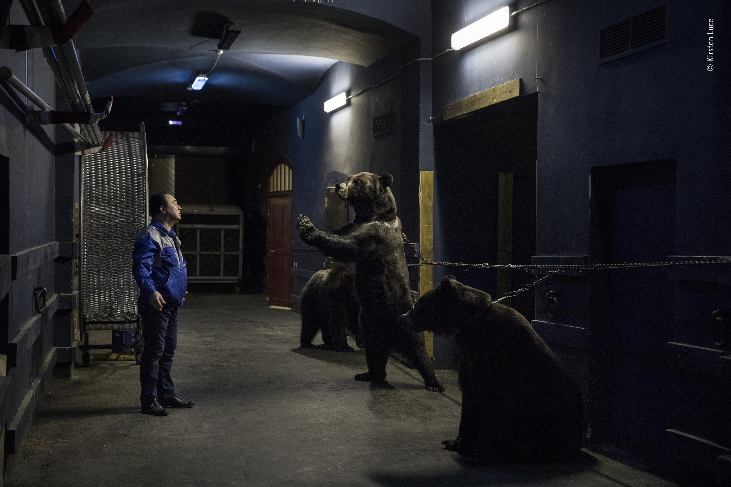 Дрессировщик Грант Ибрагимов с бурыми медведями за кулисами Санкт-Петербургского цирка. Фотограф Кирстен Люс