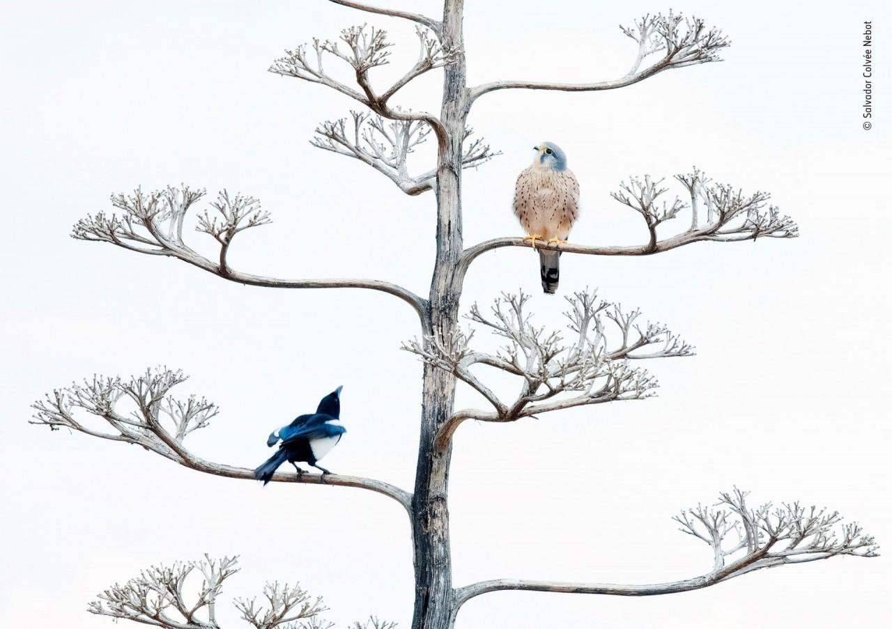 Финалист 2019. «Незваный гость». Птицы в Валенсии, Испания. Автор Сальвадор Колве Небот