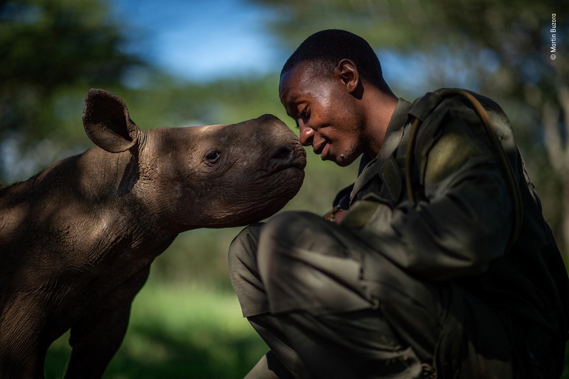 Высоко оценено, 2019. «Суррогатная мать». Рейнджер в заповеднике дикой природы в Кении ухаживает за осиротевшими чёрными носорогами. Автор Мартин Бузора