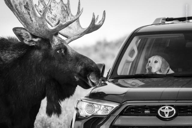 Изумляющие фотографии дикой природы с конкурса LUMIX People's Choice Award 2020
