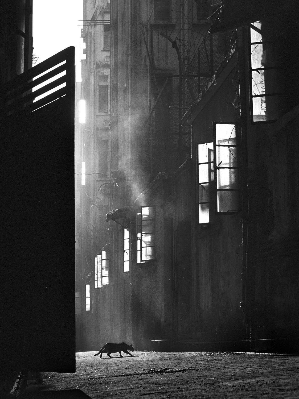 Крадущийся уличный кот, 1960. Автор Фан Хо