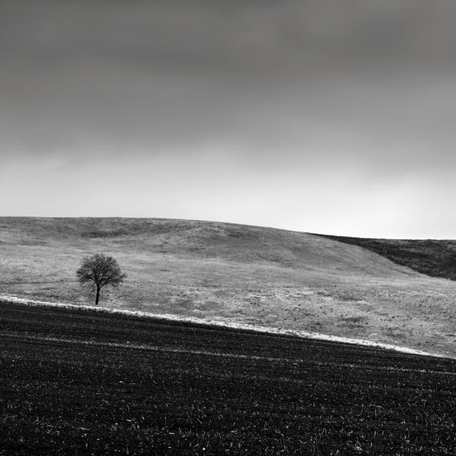 Дерево в поле. Автор Розарио Чивелло