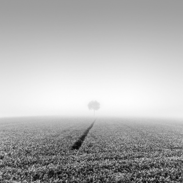 Дерево в конце линии. Автор Розарио Чивелло