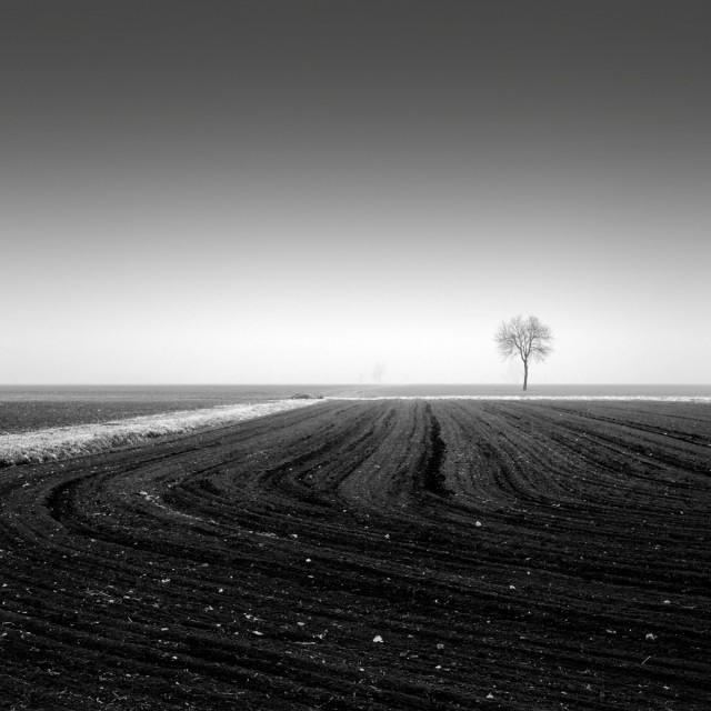 Дерево за линией. Автор Розарио Чивелло