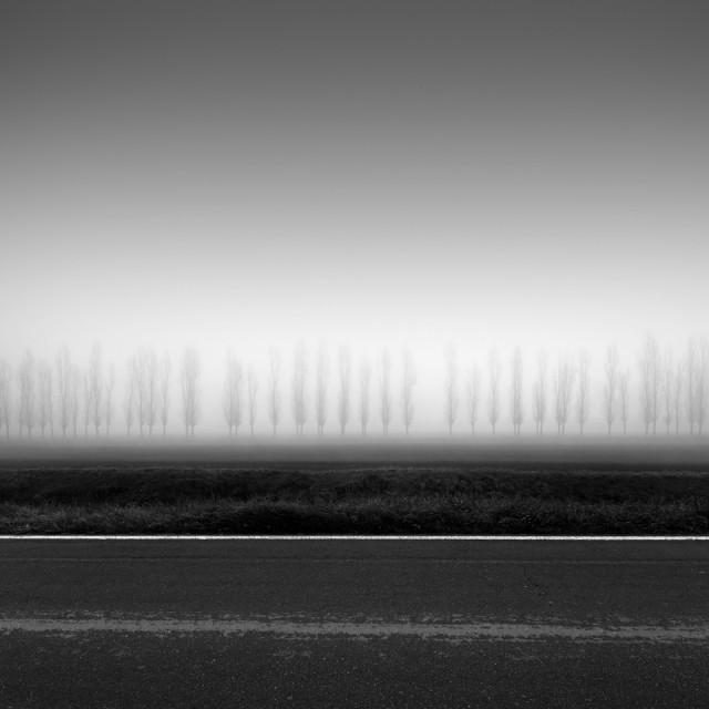 Деревья под линейку. Автор Розарио Чивелло