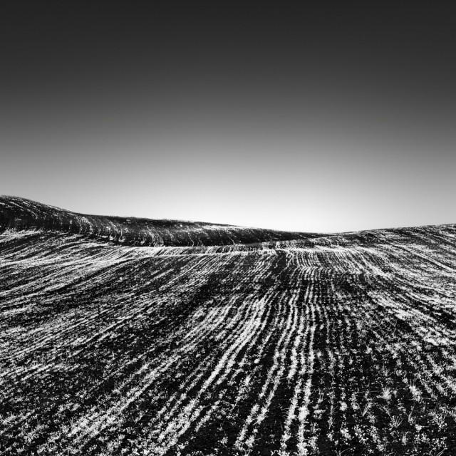 Линии на полях. Автор Розарио Чивелло