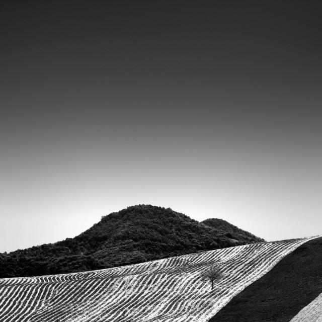 Полосатое поле. Автор Розарио Чивелло