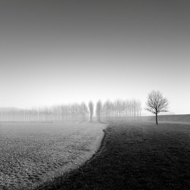 Поля. Автор Розарио Чивелло