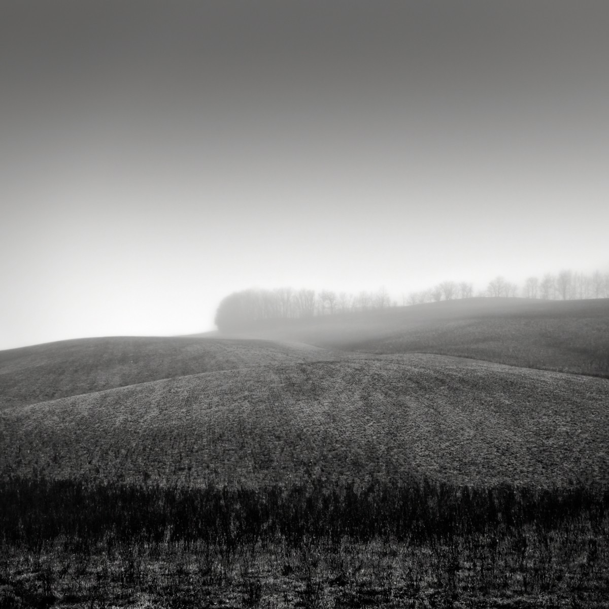 Роща на холме. Автор Розарио Чивелло
