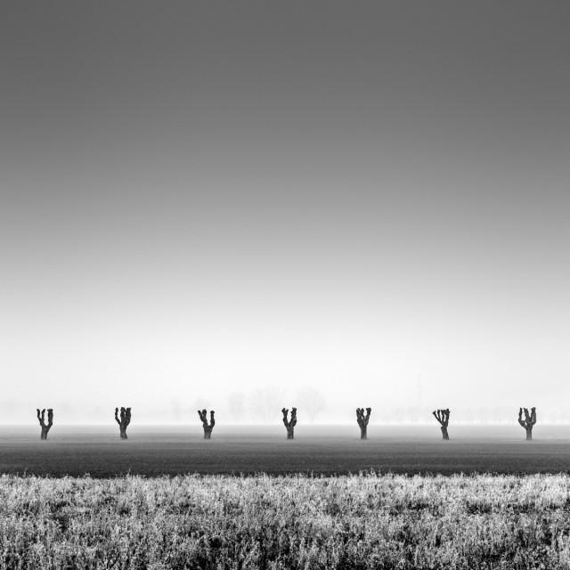 Семь деревьев. Автор Розарио Чивелло