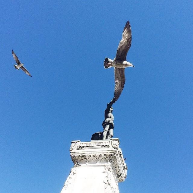Памятник и птица. Португалия. Автор Тиаго Силва