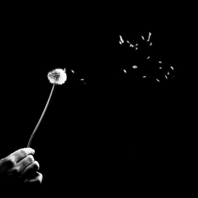 «Одуванчик». Автор Бенуа Корти