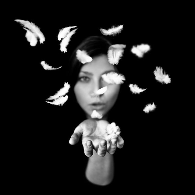 «Перья». Автор Бенуа Корти