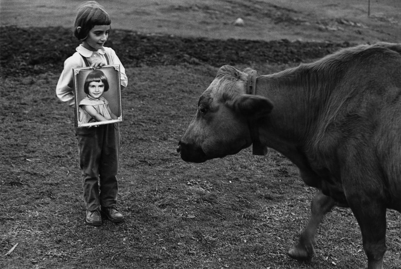 Девочка с портретом и коровой. Автор Суне Юнссон