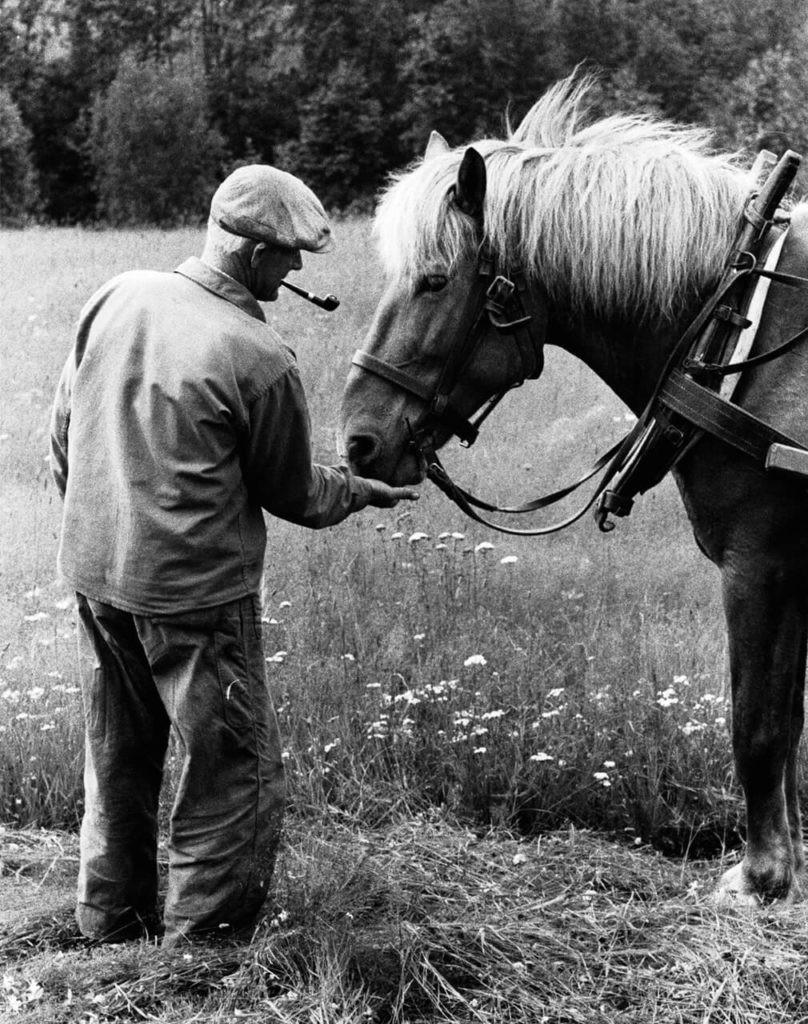 Хелмер Йонссон с лошадью, Нордмалинг, 1960. Автор Суне Юнссон