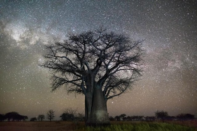 Полярная звезда. Автор Бет Мун