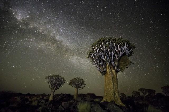 Созвездие Ворон и колчанные деревья в Намибии. Автор Бет Мун