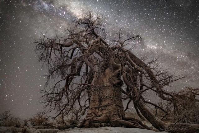 Созвездие Геркулес. Автор Бет Мун