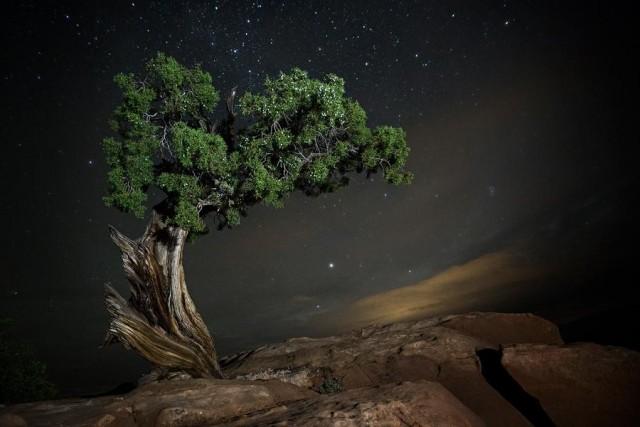 Созвездие Дельфин и можжевеловое дерево в Юте, США. Автор Бет Мун