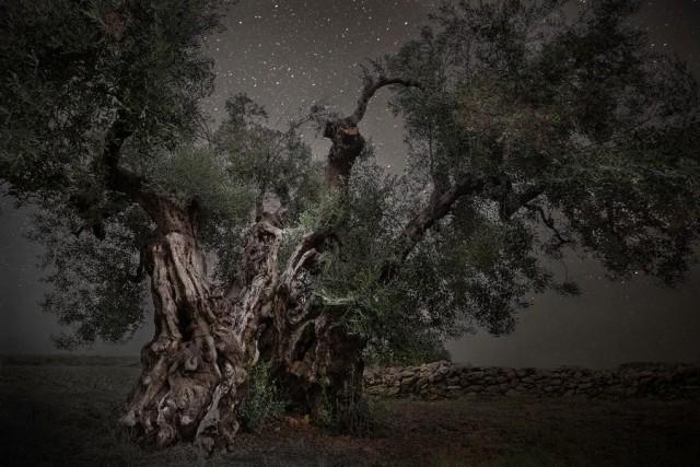 Созвездие Единорог. Автор Бет Мун