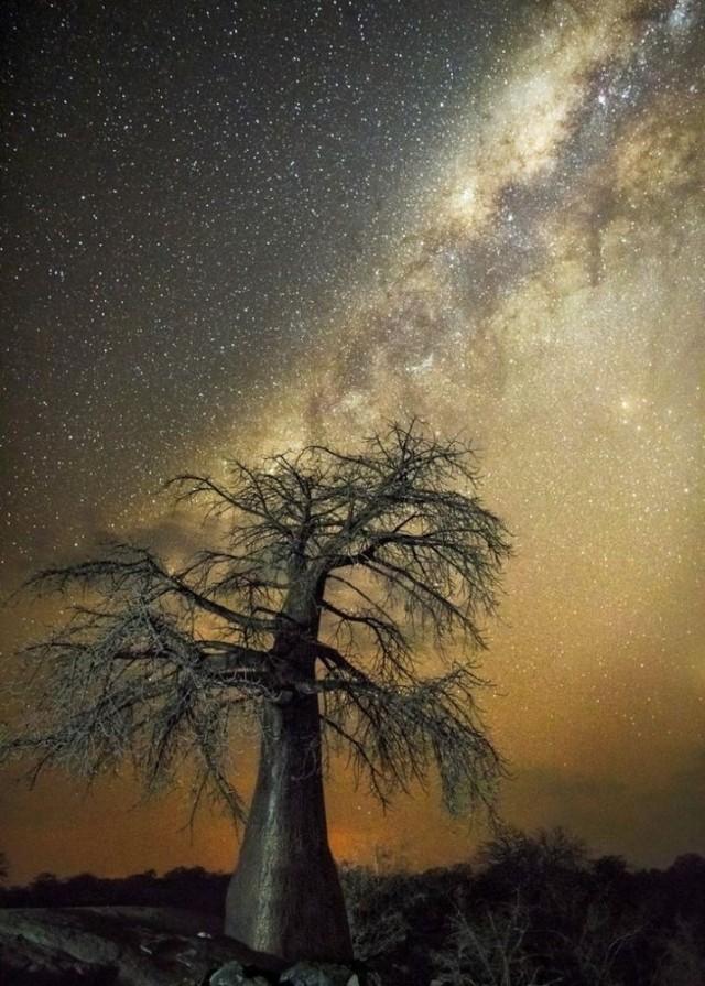 Созвездие Орёл. Автор Бет Мун