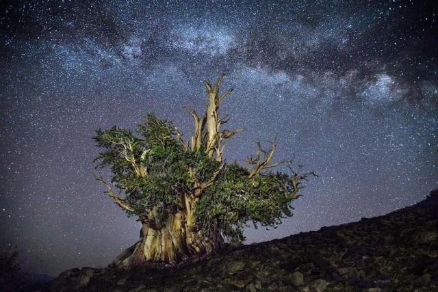 Созвездие Персей. Автор Бет Мун