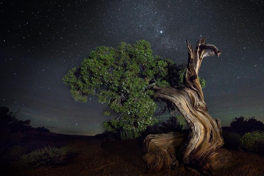 Созвездие Резец. Автор Бет Мун