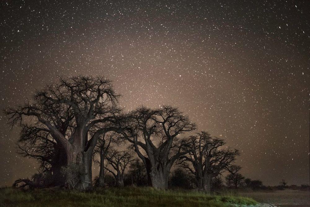 Созвездие Тукан. Автор Бет Мун
