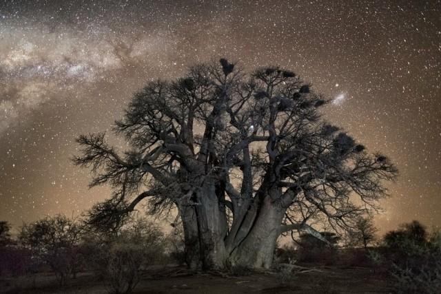 Алудра, переменная звезда в созвездии Большого Пса. Автор Бет Мун