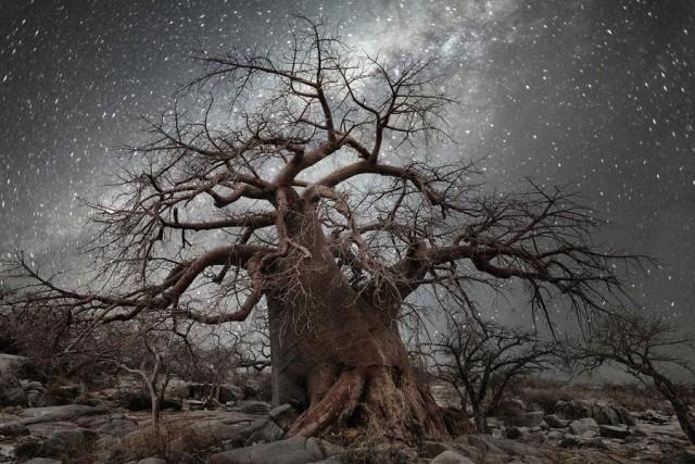 Созвездие Октант. Автор Бет Мун