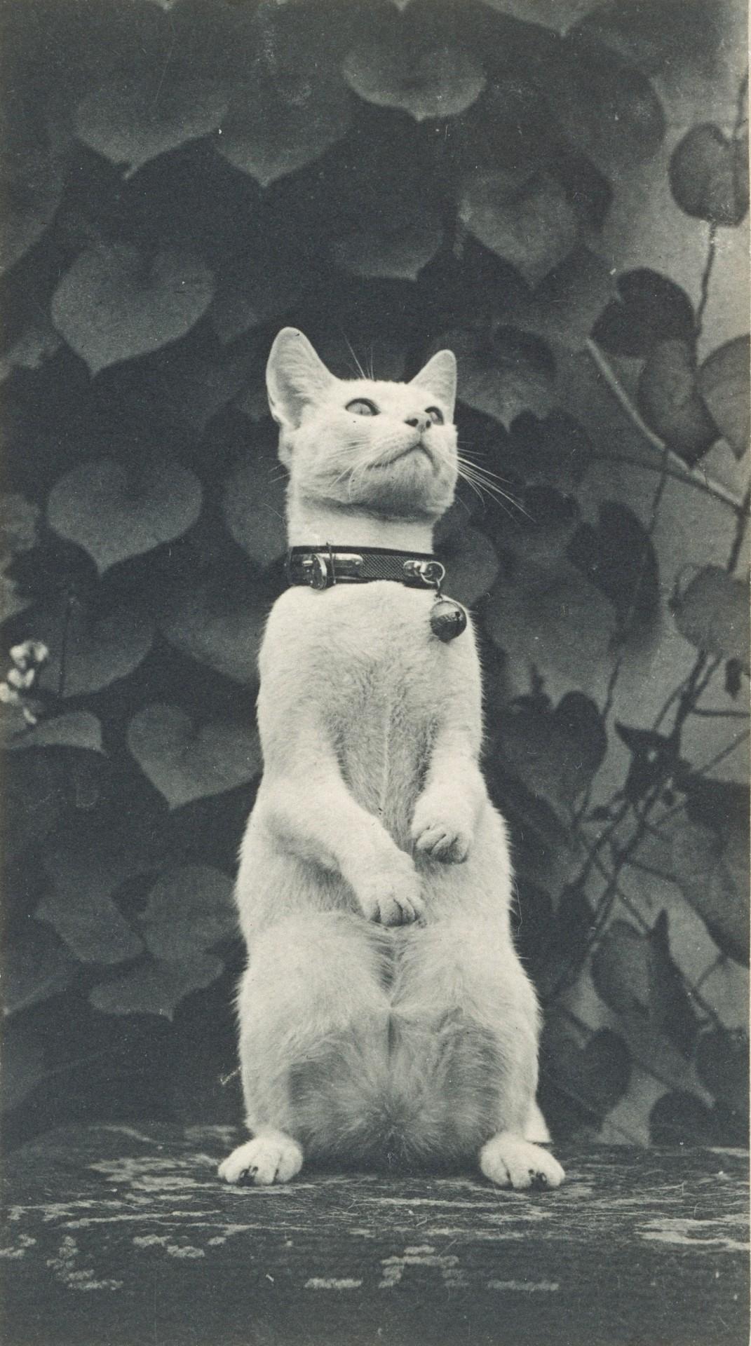 Кошка во дворе Икинса, 1880–1890. Автор Томас Икинс