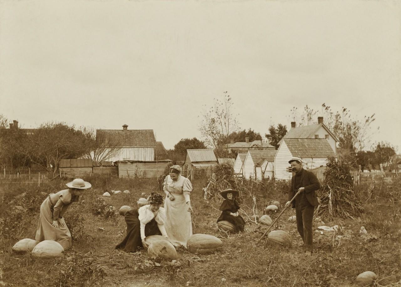 На тыквенном поле, 1898 год. Автор Джеймс Бартлетт Рич