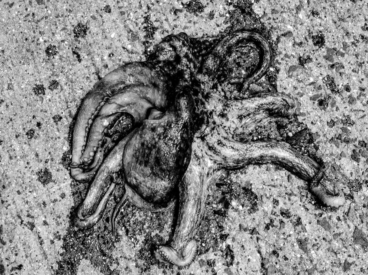 Тыл якудза в фотопроекте «Я отдаю тебе свою жизнь». Автор Хлоя Жафе (12)
