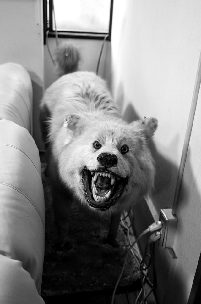 Тыл якудза в фотопроекте «Я отдаю тебе свою жизнь». Автор Хлоя Жафе (11)