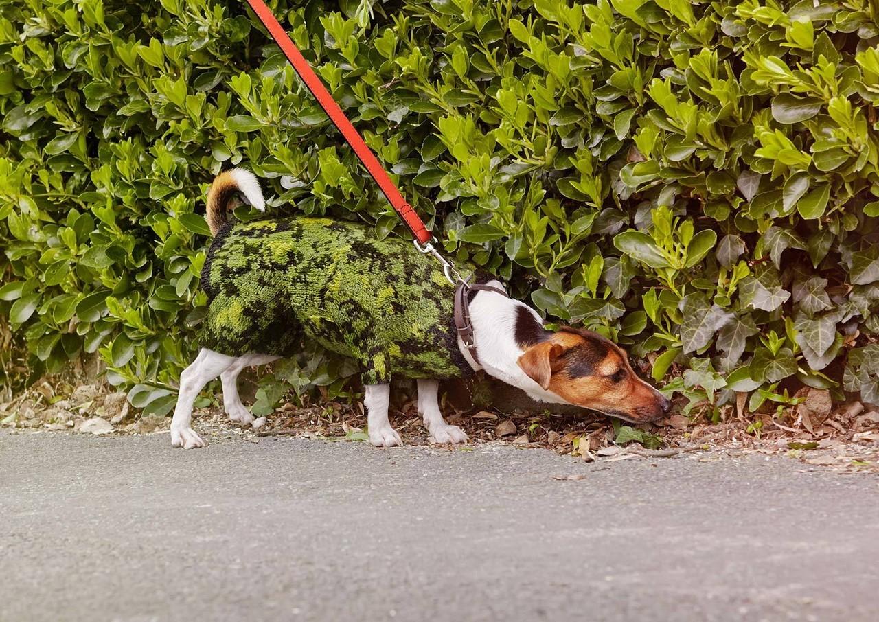 Камуфляжная собака. Автор Джозеф Форд