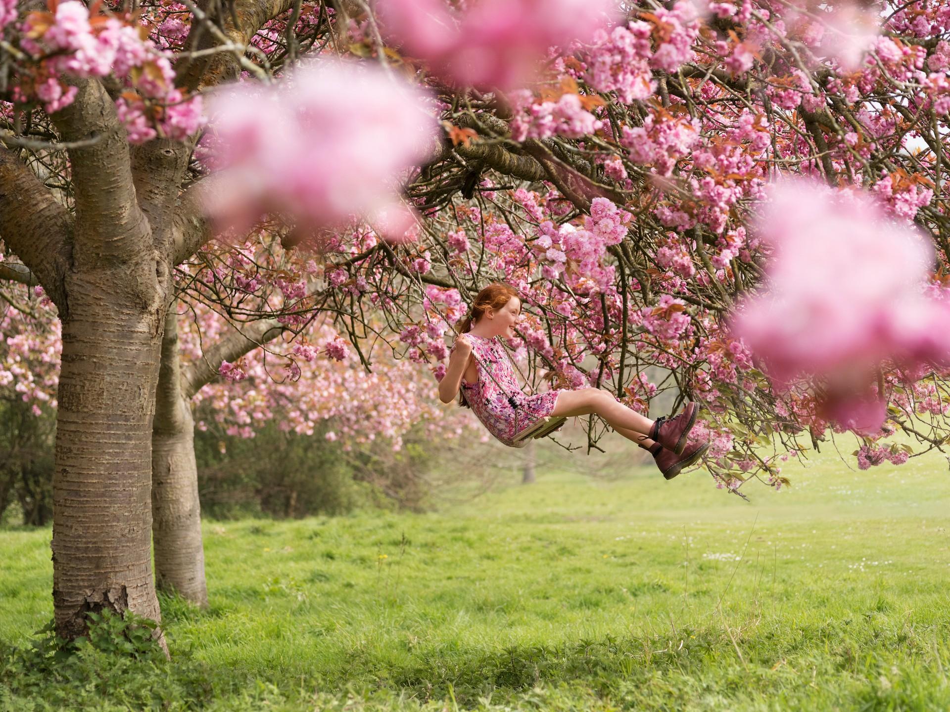 Цветущая вишня в парке Стэнмер. Автор Джозеф Форд