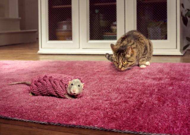 Крыса Бадди и кошка. Автор Джозеф Форд